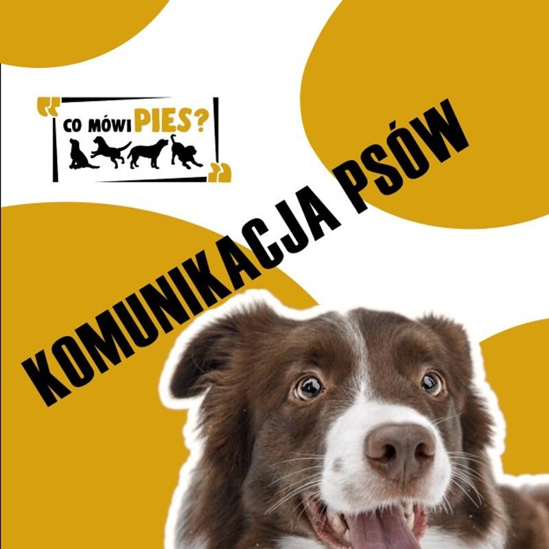 szkolenia online dla właścicieli psów