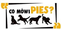 szkolenia online dla właścicieli psów,